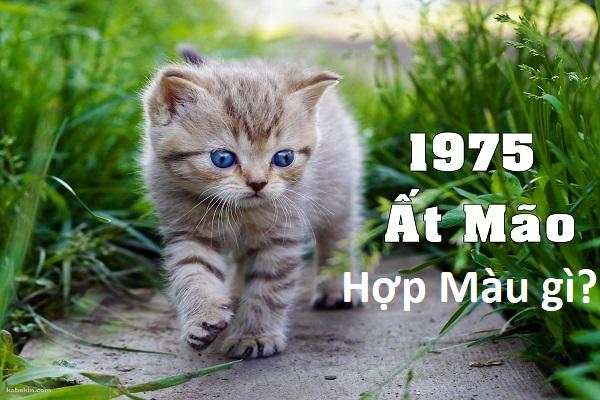 Sinh năm 1975 hợp màu gì? Tuổi Ất Mão kỵ màu gì?