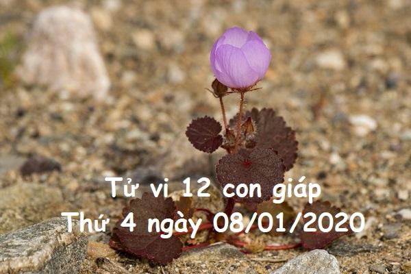 Xem tử vi Thứ 4 ngày 08/01/2020 của 12 con giáp-1