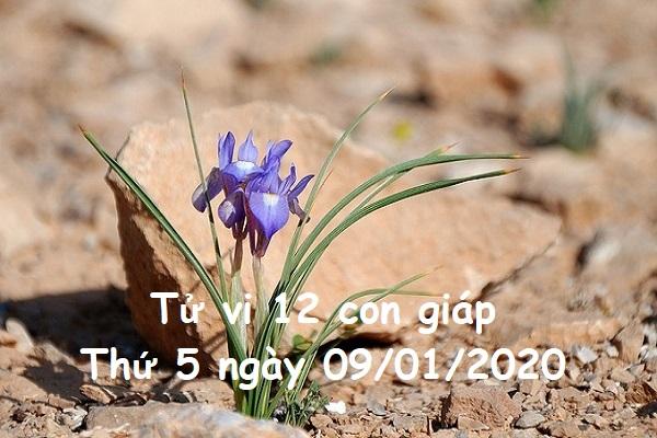 Xem tử vi Thứ 5 ngày 09/01/2020 của 12 con giáp-1