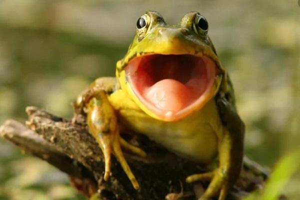 Nằm mơ thấy ếch báo hiệu điềm gì? Đánh số mấy?-3
