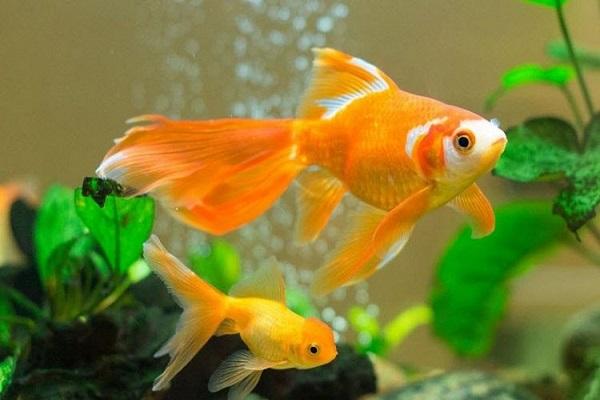 Nằm mơ thấy cá là điềm báo gì? Đánh số mấy?-4