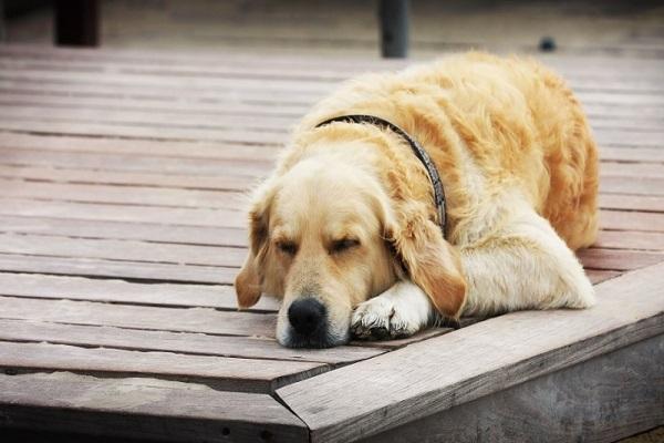 Nằm mơ thấy chó là điềm báo gì? Đánh số mấy?-3
