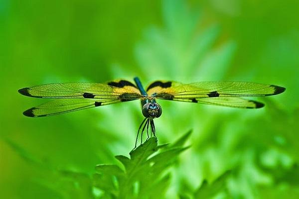 chuon chuon bay vao nha - Giải thích câu ca dao: Chuồn chuồn bay thấp thì mưa. Bay cao thì nắng bay vừa thì râm