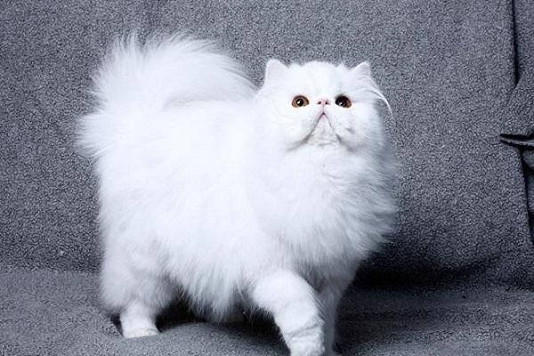 Mèo vào nhà là điềm báo gì? Đánh con gì-3