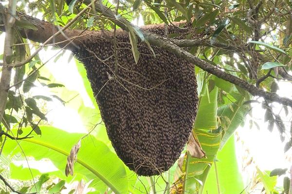 Con Ong số mấy? Mơ thấy Ong đánh con gì dễ trúng? - NgayAm.com
