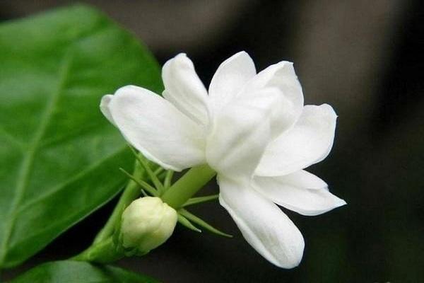 Những loại hoa không nên thờ cúng, kẻo mất tài lộc-4