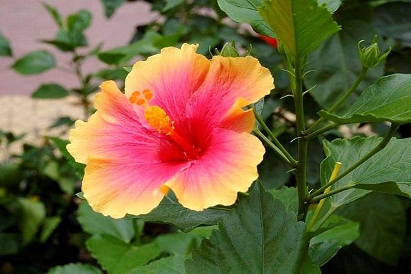 Những loại hoa không nên thờ cúng, kẻo mất tài lộc-5