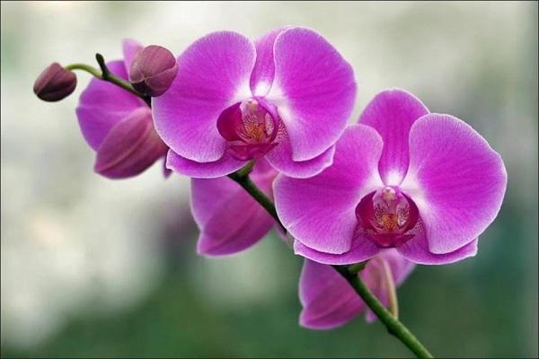 Những loại hoa không nên thờ cúng, kẻo mất tài lộc-6