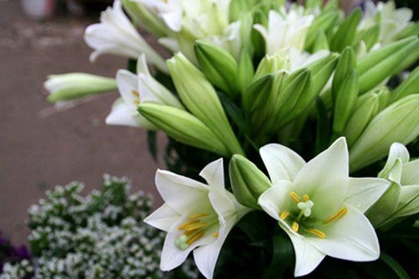 Những loại hoa không nên thờ cúng, kẻo mất tài lộc-2