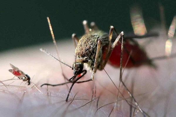 Con muỗi số mấy? Số đề con muỗi nên đánh-2