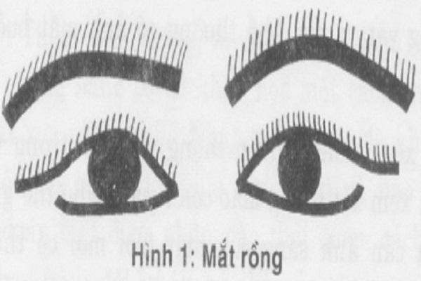 Tướng mắt rồng ở nam nữ có ý nghĩa gì?-1